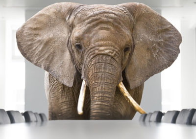 The Elephant in the Boardroom
